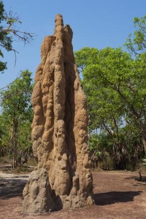 Magnetic Termite Mound in Litchfield National Park, Australia Standard-Bild
