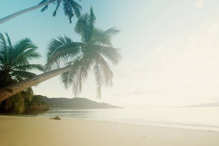 Palm tree leans towards the Pacific Ocean in tropical paradise