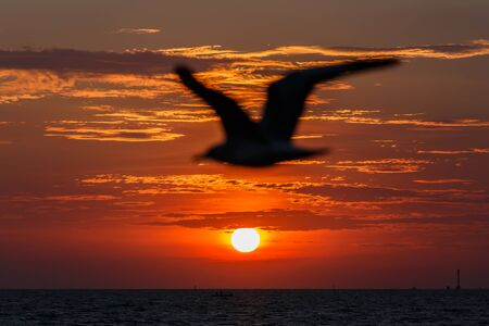 sunset yellow water gold and seagull silhouette photo