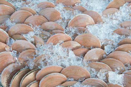 petoncle: p�toncles sur la glace