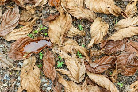 dode bladeren: Dode bladeren in de herfst Redactioneel