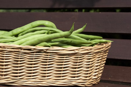 Bean harvest in a basket on a bench