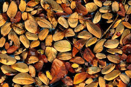 Fallen leafs Stock Photo