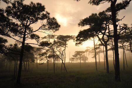 shady: The shady forest