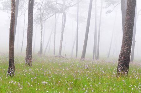 Misty forest with flowers on the ground  Poo-Soidao National Park, Thailand Stock Photo