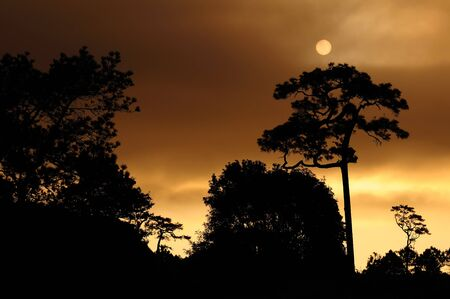 Beautiful landscape image with sun above trees silhouette at sunset  Stock Photo