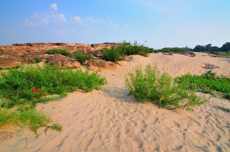 sand and desert plants