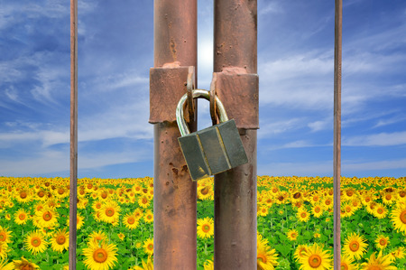 lock key on rusty fence and flower plant background Stock Photo