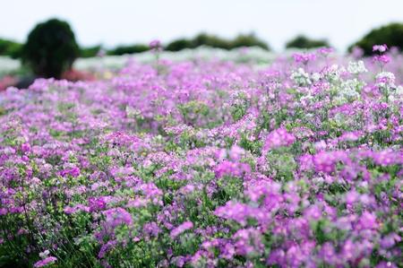 Flowers field Stock Photo