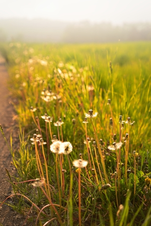 Golden light on flowers and meadow