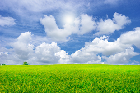 beautiful green grass field in vibrant meadow under white cloud on blue sky and sun