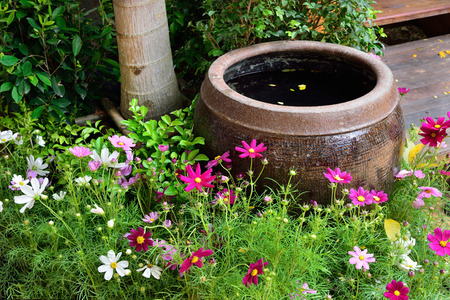 Ancient Thai jar for containing rain water in the garden with Cosmos flowers