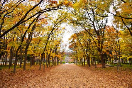 Osaka Park, around Osaka castle at autumn, Japan