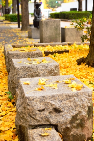 Stone seats in the mist of fallen yellow gingko leaves under gingko tree on footpath at autumn beside a road around Himeji Castle, Japan Stock Photo