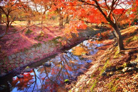 Nara Park in autumn Stock Photo