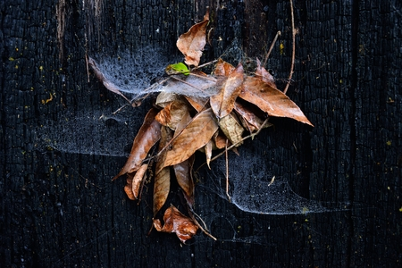 Spider cobweb with fall brown leaf on burnt wood