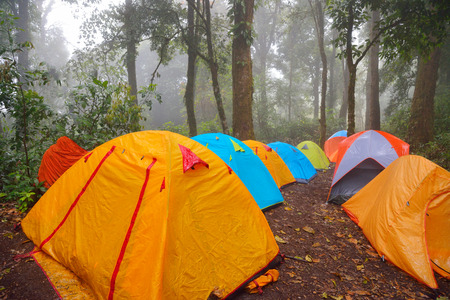 Tents in camping site in rainforest