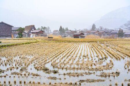 Harvested rice field under snowing winter in Shirakawago historic village, Ono district, Gifu prefecture, Japan 写真素材