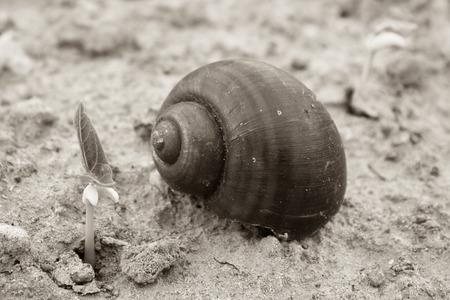 snail on soil Stock Photo
