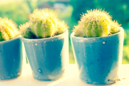 若いサボテンの植物