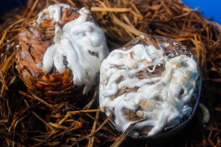 Hypsizygus marmoreus (Peck) Bigelow (Coprinus spp.) On straw.