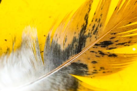 鳥の羽 写真素材 - 90263856