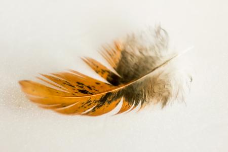 鳥の羽 写真素材 - 90263859