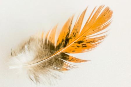 feather of bird 写真素材