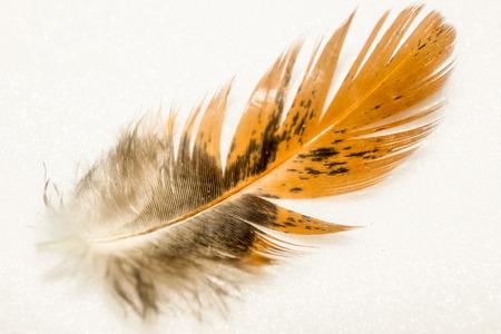 鳥の羽 写真素材 - 90263864