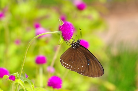 butterfly on flower from Thailand background photo