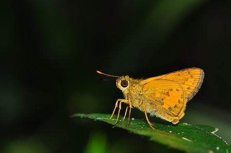 yellow butterfly from Thailand background photo