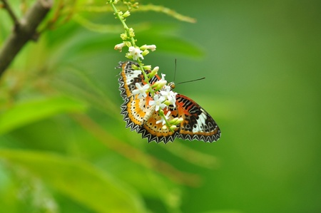 red yellow butterfly on flower of Thailand background photo