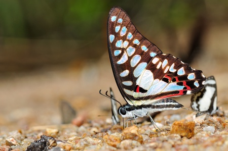 amazing butterfly spray water from Thailand background Stock Photo - 12369662