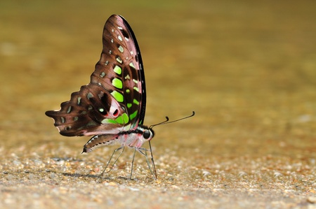 butterfly color from Thailand background Stock Photo - 12369703