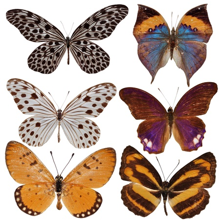 Collection of colored butterflies isolated on white  Stock Photo - 12929576