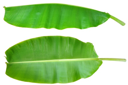 Fresh Banana Leaf Isolated with clipping path Stock Photo - 12929429