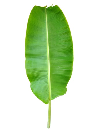 Fresh Banana Leaf Isolated with clipping path  Stock Photo