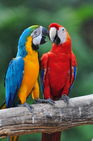 colorful parrot love bird macaw sitting on branch photo
