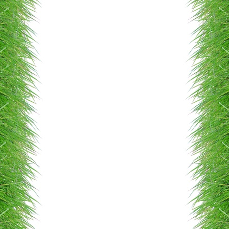 Fresh spring green grass on white background with copy space photo