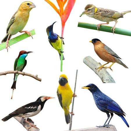 Kolekcja ptaków na białym tle Zdjęcie Seryjne - 13002112