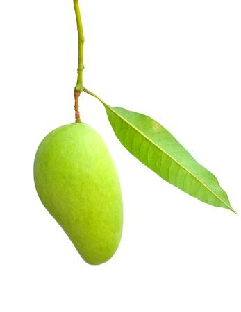 Fresh green mango isolated on white background