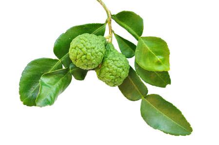sanguijuela: sanguijuela frutos de lim�n aislado en blanco