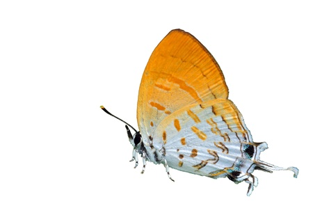 A close up of the butterfly. Isolated on white