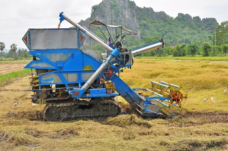 Farm worker harvesting rice with tractor in Thailand Stock Photo - 13931387