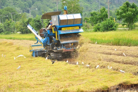 Farm worker harvesting rice with tractor in Thailand Stock Photo - 13931390