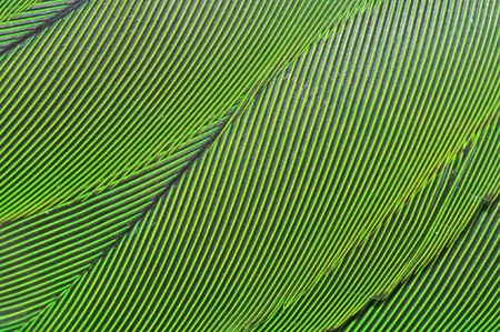 Colorful green parrot wing Plumage  photo