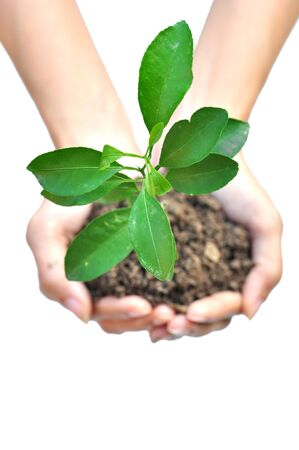 One plant in female hands on white background  photo