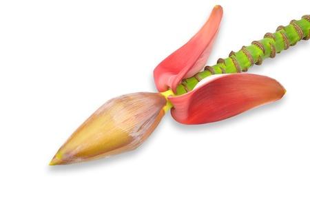 Banana flower eaten as delicious vegetable isolated on white. photo