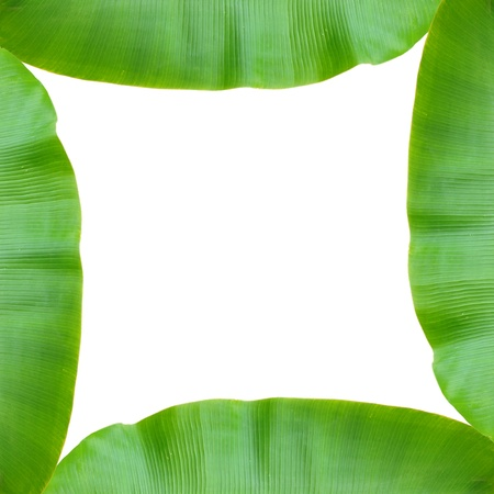 isolated banana leaf on white photo
