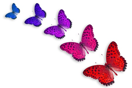 Five Color Butterflies, isolated on white
